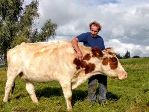 Koe met boer
